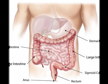 Terapia Microbiologica
